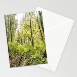 Schrader Old Growth Forest Stationery Cards