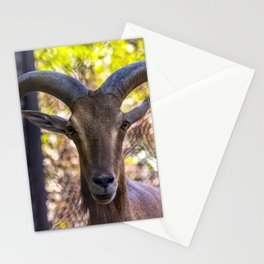 Mountain goat Stationery Cards
