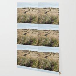 Oregon Dune Grass Adventure - Nature Photography Wallpaper