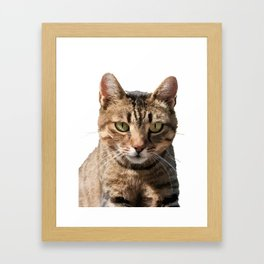 Portrait Of A Cute Tabby Cat With Direct Eye Contact Isolated Framed Art Print