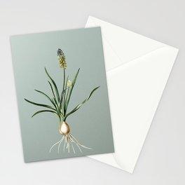 Vintage Muscari Ambrosiacum Botanical Illustration on Mint Green Stationery Cards