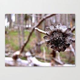 Pine Flower Canvas Print