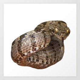 Ottoman Viper Snake Tasting The Air Art Print