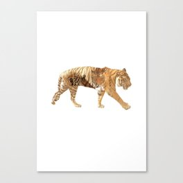 Tiger tripple exposure Canvas Print