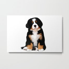 Bernese mountain dog puppy Metal Print