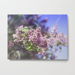Flowers Lilac Branch Close-up Outdoors Sunny Day Metal Print