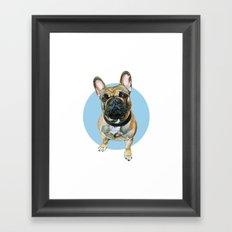 French Bulldog blue spot. Framed Art Print