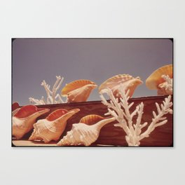 Souvenir Seashells Canvas Print