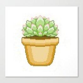 Cute Succulent Canvas Print