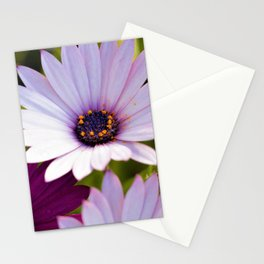 African Daisies by Reay of Light Photography Stationery Cards