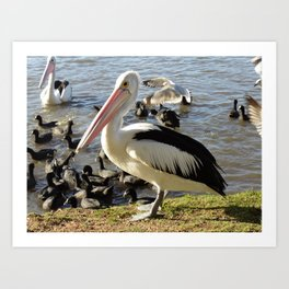 Bird Gatherings Art Print