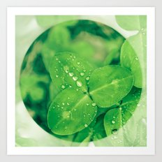 Clover leaf in the rain Art Print