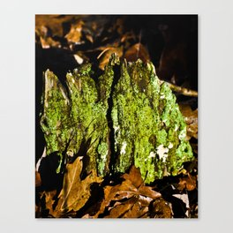 Mountain Moss Canvas Print