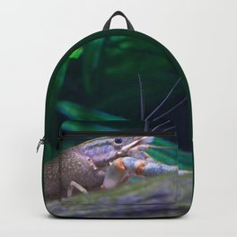 The crayfish Backpack