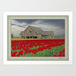 RED TULIPS AND BARN SKAGIT FLATS Art Print
