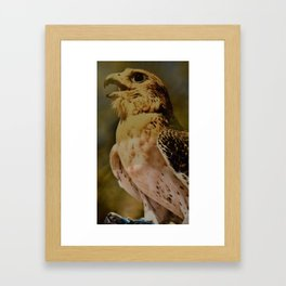 arabic falcon Framed Art Print