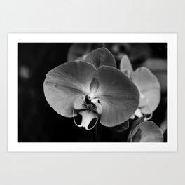 Black Orchid Art Print