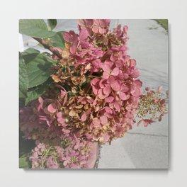 Bush Pink Petals Metal Print