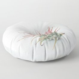 Air Plant Floor Pillow