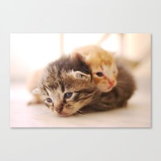 He ain't heavy... Canvas Print
