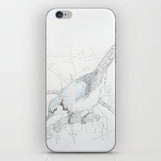 Cyanocitta cristata iPhone & iPod Skin