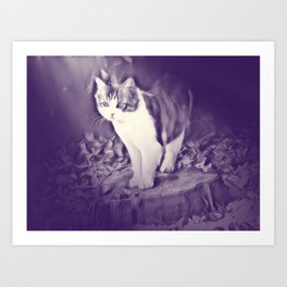 Podium (cat) by GEN Z Art Print