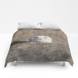 Peekaboo Snowy Owl Comforters