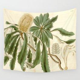 Banksia integrifolia (Coast Banksia) 1827 Wall Tapestry