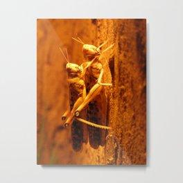 Prague Zoo I Metal Print