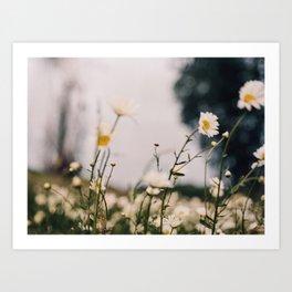 Dreamy flower field on 35mm film Art Print