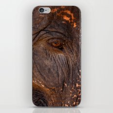 Gentle and Wise iPhone & iPod Skin