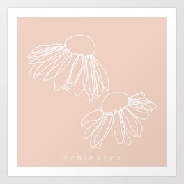 Origins of Echinacea Art Print