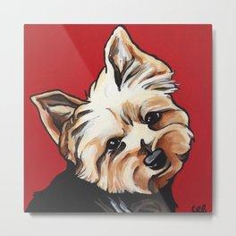 Pet/Dog Portrait of Yorkshire Terrier/Yorkie on Red Metal Print