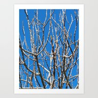 fig Art Prints featuring Fig by aeolia