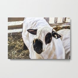 Baa Baa Black Sheep in Disguise Metal Print
