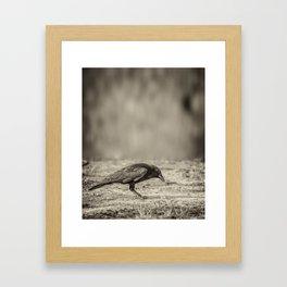 Curious Crow Framed Art Print