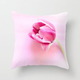 One tulip closeup studio shot Throw Pillow