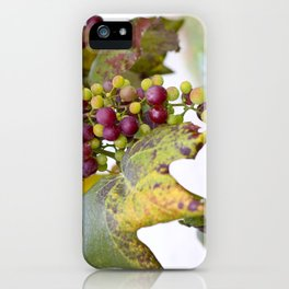 Green and purple grapes on the vine iPhone Case