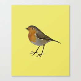 Rory the Robin  Canvas Print
