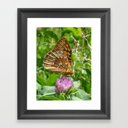 Great Spangled Fritillary Butterfly 2 Framed Art Print