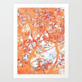 Orange Trees Art Print