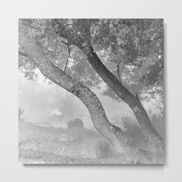 Curved trees. Into the deep forest. Sierra Nevada Metal Print
