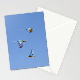 Blue macaws flying under blue sky Stationery Cards