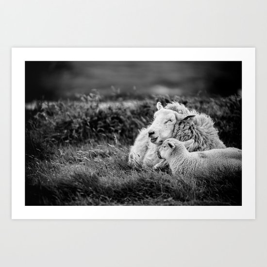 Lamb and mother. Art Print