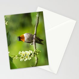 Hummingbird XVI Stationery Cards