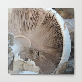 TEXTURES -- Mushroom Uprooted Metal Print