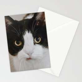 Cat Portrait with Texture Stationery Cards