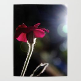 Flower with Sun Outline Poster