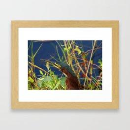Green Heron Portrait Framed Art Print