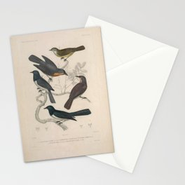 platyrhynchus (Fr),  platyrhynque ocenien (Fr),  muscivore plombe (Fr),  myscivore moine (Fr),  gobe-moucheron verdin (Fr)4 Stationery Cards